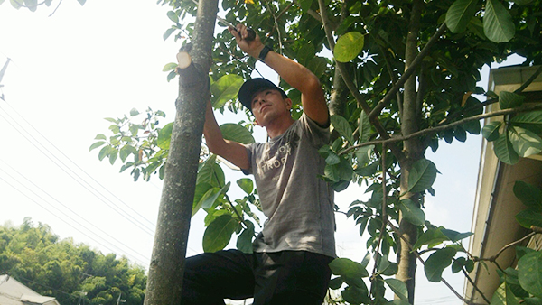 植木剪定、伐採