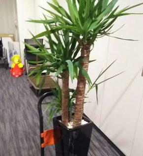 観葉植物の回収処分